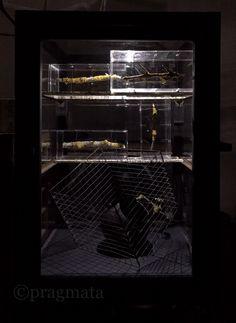 """Wood in Darkness"" Igarashi Yuki woodworks exhibition 「暗闇に木」 五十嵐裕貴 個展 #pragmata"