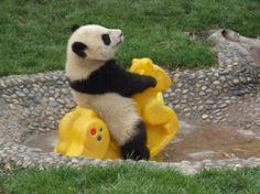 Panda. Person Toy. Yeah.