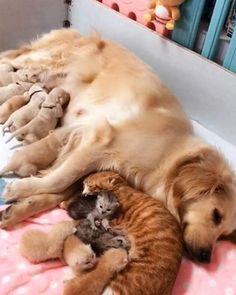 No dog & cat fight here! No dog & cat fight here! Happy Animals, Cute Funny Animals, Cute Baby Animals, Animals And Pets, Cute Puppies, Cute Dogs, Dogs And Puppies, Cute Babies, Newborn Puppies