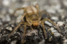 Spider by Lennart Tange, via Flickr