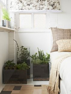 A mix of tall, bushy and cascading plants works well when adding pot plants to your home.
