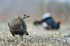 Прекрасные снимки дикой природы от Сергея Горшкова
