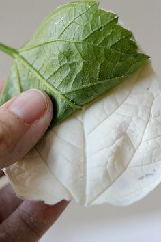 How to make chocolate leaves for decorating cupcakes and cakes. I love this idea! Any opinions from my cake crew? Maybe with fake water lily leaves or I wonder how the petals would look ! :)