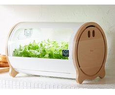 「部屋の中でも簡単に野菜が育てられる」と注目の水耕栽培。今回は、スマホとリンクして野菜が育てられる、スマート水耕栽培キットを紹介します。『foop』は、専用アプリと連動して野菜が育てられる、水耕栽培キ...