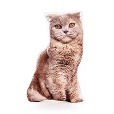 Highland Fold Scottish Fold Cat Scotland Scottish Cat Scottish Decor, Cat Scottish Fold, Cat Cushion, Tall Boys, Brown Pillows, Cat Pillow, Kittens, Cats, Your Best Friend