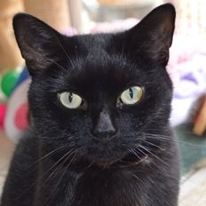 Black cats are anything but unlucky