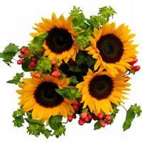 Sunflowers Wedding Bouquets. - 6 bouquets, 6 stems each, $69.99