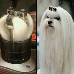 My Coil and My Dog Lol#vapememe #meme #vape #vapelifestyle #vapenation #vapedaily #vapelove #vapecommunity #vapefam #vaping #vapestagram #vaper #vapeescapes #vapeon #vapeordie #vapehappy #vapeaddict #vapealldayeveryday #vapefam #vapely