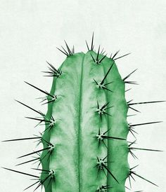 Cactus Plant Print Cactus Photography Green Wall Art by TaiPrints
