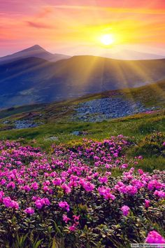 Sunrise and spring flowers wallpaper