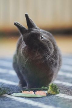 If you are searching for a family pet which is not only cute, but easy to have, then look no further than a family pet bunny. Funny Bunnies, Baby Bunnies, Cute Bunny, Bunny Rabbits, Adorable Bunnies, Bunny Bunny, Hamsters, Beautiful Creatures, Animals Beautiful