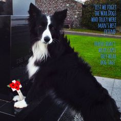 """#Je Suis Diesel#JeSuisChien#""""Lest we forget the war dogs who truly were man's best friend....Heroes don't wear capes they wear dog tags"""" New in the life of Asha...!"""