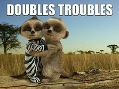 Baby Oleg and a friend Baby Meerkat, Double Trouble, Animal Quotes, Teddy Bear, Cute, Pictures, Bobs, Animals, Funny Things