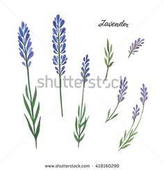 Watercolor branches and leaves of lavender. Eco products isolated on white background. Watercolor illustration of culinary herbs and spices to your menu.