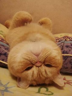 Cats love to lay upside down.  Cat owners have known this for eons, but those who don't know cats would never guess...