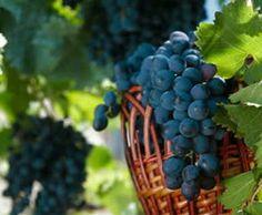 L'Italia è il terzo Paese dell'Unione Europea per superficie coltivata a vigneto. Le maggiori superfici a vite in Spagna e Francia. L'Italia dedica alla produzione di vino di qualità il 52,1% dell'uva che coltiva, contro la media Ue del 78%