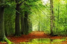 A Rainy Day In The Forest by LHJB Photography on 500px