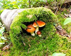 Mushroom Family and moss in a log