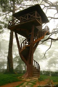A cool tree house in Baguio. Hill Forrest I thought you might like this one. A cool tree house in Baguio. Hill Forrest I thought you might like this one. Cool Tree Houses, Tree House Designs, Street House, Tree Tops, In The Tree, Shed Plans, Little Houses, Play Houses, My House