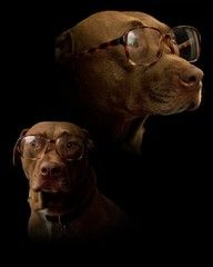 I would so do this with Duke, maybe with better glasses. Lol