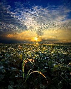 lucid, natur beauti, beauti photosplac, beauti scene, sun, photographi