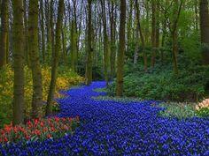 worlds largest flower garden  Keukenhof Netherlands