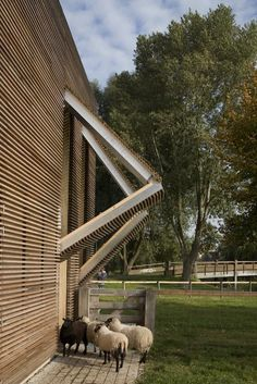Petting Farm / 70F Architecture | ArchDaily http://www.archdaily.com/29965/petting-farm-70f-architecture