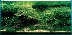 Картинки по запросу Амано Takashi Amano, Aquarium, Plants, Goldfish Bowl, Fish Tank, Planters, Aquarius, Plant, Planting