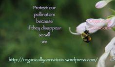 pollinators Consciousness, About Me Blog, Knowledge