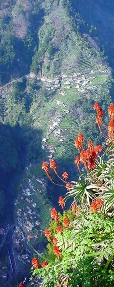 Madeira Island, a part of Portugal, is a popular year-round resort, being visited every year by about one million tourists, noted for its Madeira wine, flowers, landscapes and embroidery artisans.   Go to www.YourTravelVideos.com or just click on photo for home videos and much more on sites like this.