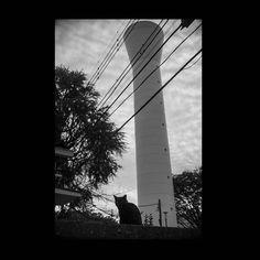 https://flic.kr/p/ALJkza   Cat November 2015  #cat #photograph #blackandwhitephotography