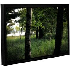 ArtWall Kevin Calkins Birch and Pines Gallery-Wrapped Floater-Framed Canvas, Size: 16 x 24, Black