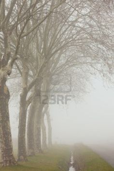 A country road on a foggy day at France Stock Photo