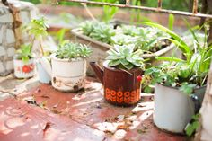 Beautiful pot plants, old enamel mugs Pot Plants, Moscow Mule Mugs, Wedding Venues, Planter Pots, Centerpieces, Enamel, Gardens, Tableware, Beautiful