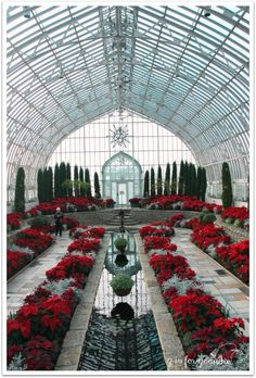 Conservatory at Como Park My sister and I visited the Marjorie McNeely Conservatory at Como Park last weekend to check out the Poinsettia display. Beautiful Architecture, Beautiful Buildings, Architecture Design, Most Beautiful Pictures, Beautiful Places, Beautiful World, Garden Design, House Design, Design Design