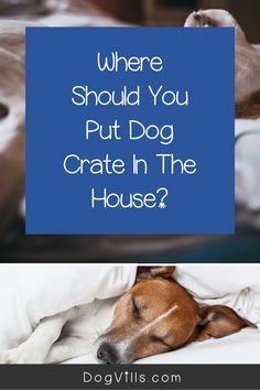 "Are you wondering ""does my dog need a bed in his crate?    ""You might if you've just started crate training your dog and don't know what to put in your puppy's crate.    Fortunately, I've got all the answers you need on how to make your dog's crate more comfortable. Best Puppies, Best Dogs, Dogs And Puppies, Crate Training, Dog Training Tips, Cute Dog Collars, Emergency Vet, Puppy Food, Sleeping Dogs"