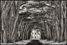 Cypress Tree Tunnel by geckonia, via Flickr