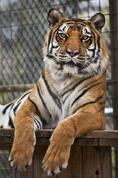 Large Animal Sanctuary in Albion - Rescued large animals with guided tours on the weekends during the summer or by apt.  Looks amazing.