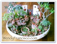 Love all the tiny pots...miniature succulent garden