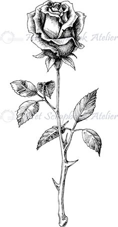 Develop A The Moment Upon A Dream Fairy Tale Birthday Bash Hp Stempel Roos Klein Pencil Drawings Of Flowers, Flower Sketches, Pencil Art Drawings, Art Drawings Sketches, Tattoo Sketches, Rose Drawings, Rose Drawing Tattoo, Flower Tattoo Drawings, Flower Tattoos