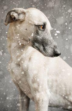 In the depth of winter by Elke Vogelsang via 500px.com