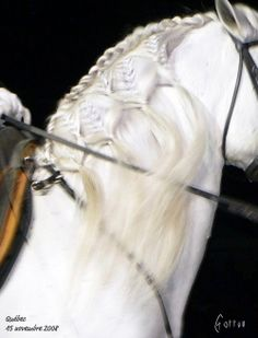 Herrmann's Royal Lipizzan Stallions and their mares rank among our favorite snowbirds in the Sarasota area on the west coast of Florida. They...