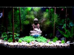 Buddha theme Aquarium - YouTube
