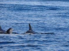 Delfintour in Lagos