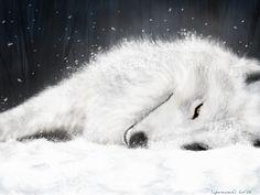 wolf pics | white wolf - Wolves Wallpaper (3582692) - Fanpop fanclubs