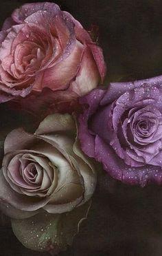 Belas rosas 🌹 🌿 🌷 🌿 🥀 gardens flowers, colorful wallpaper и Flowers Background, Flowers Wallpaper, Flower Phone Wallpaper, Colorful Wallpaper, Wallpaper Desktop, Iphone Wallpapers, Wallpaper Backgrounds, Floral Wallpapers, Exotic Flowers