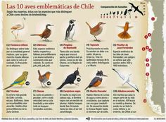 Las Aves que Viven en Chile: Los Nombres de las Aves que Viven en Chile