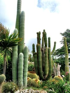 Cactus Garden, Eze, France 2012 / by Marny Perry