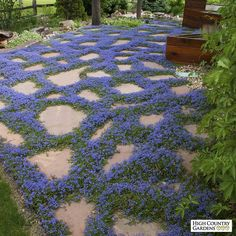 Turkish speedwell is one of our showiest blue flowered groundcovers native to th., Turkish speedwell is one of our showiest blue flowered groundcovers native to the mountains of Turkey. Spreading stems of evergreen foliage root as th. Amazing Gardens, Beautiful Gardens, Organic Gardening, Gardening Tips, Container Gardening, Gardening Supplies, Sustainable Gardening, Gardening Gloves, Gardening Apron