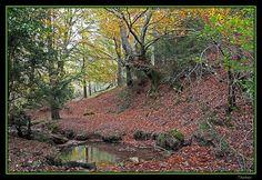 Parque natural de Valderejo #Euskadi #BasqueCountry